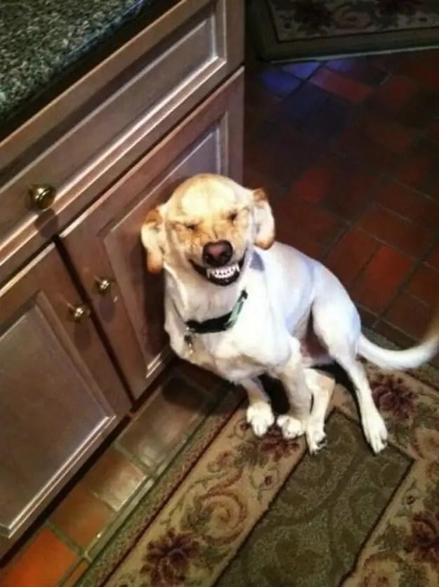 enhancedbuzz17204136380 - #Fotos 33 perros totalmente descontrolados