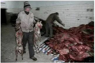 Carnicero de perros