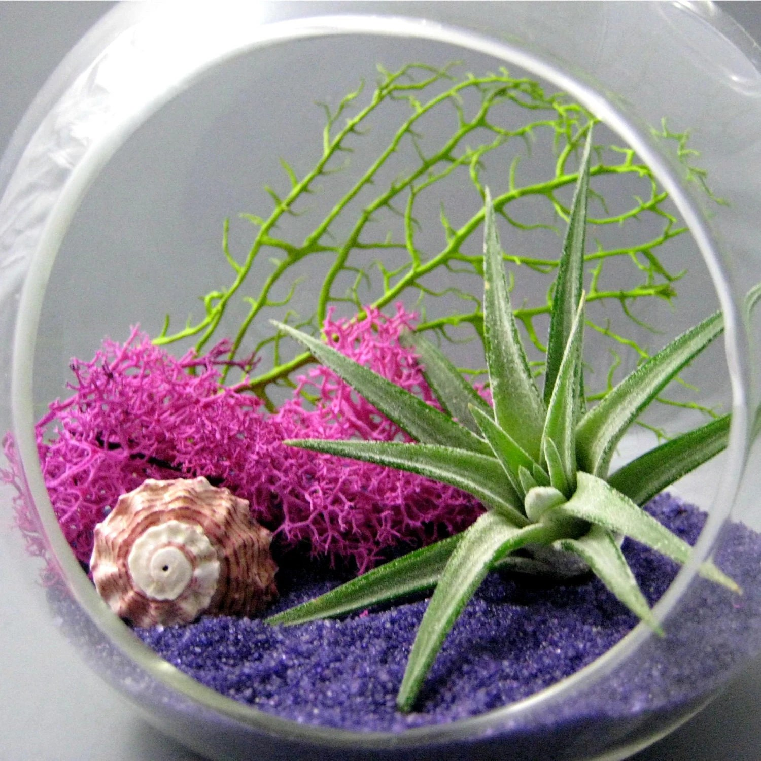 Fuchsia Purple Air Plant Terrarium