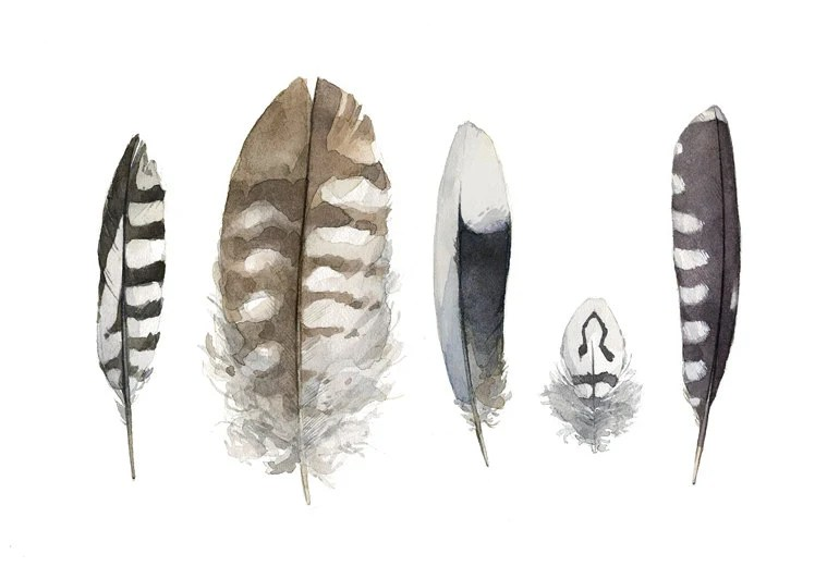 Striped Feathers Watercolor Painting - 5x7 Print - studiotuesday
