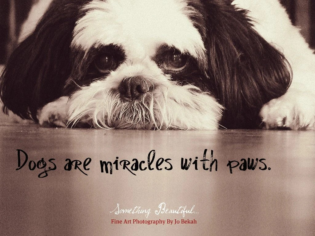 Dogs are Miracles with Paws 11 x 14 print vintage sepia toned Dog