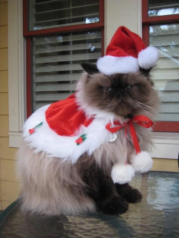 Pink Animal Print Wallpaper Cat Christmas Amp Hanukkah Gifts For Cats Amp Cat Lovers