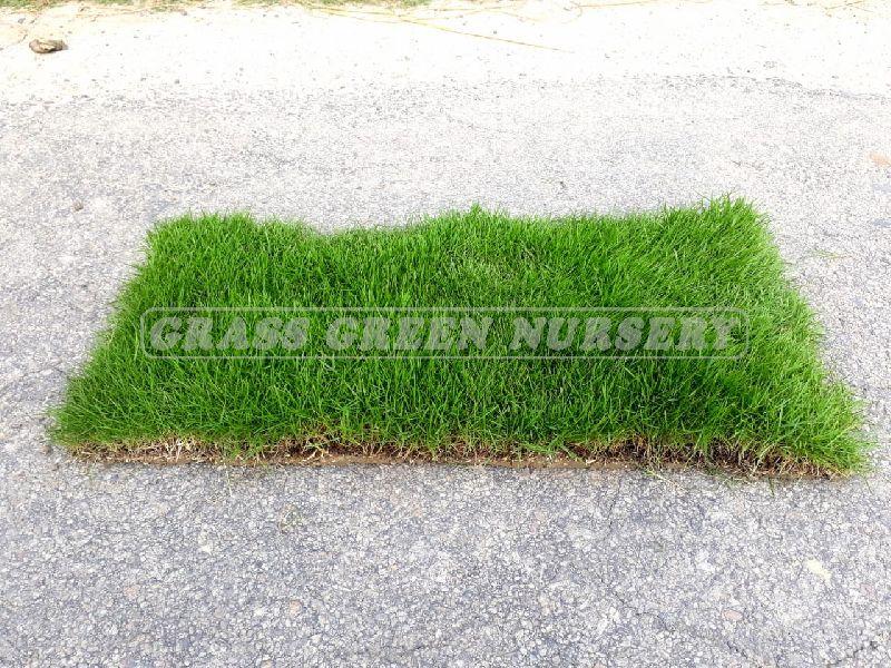 Garden Grass Manufacturer In Guwahati Assam India By Ggn Pvt Ltd Id 4993579