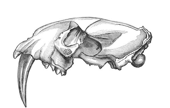 Wallpaper sake, drawing, teeth images for desktop, section