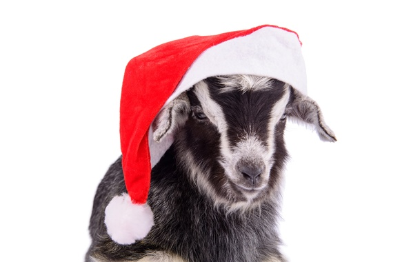 Cute Kid Wallpaper Iphone Wallpaper Hat New Year Goat New Year Goat 2015 Santa
