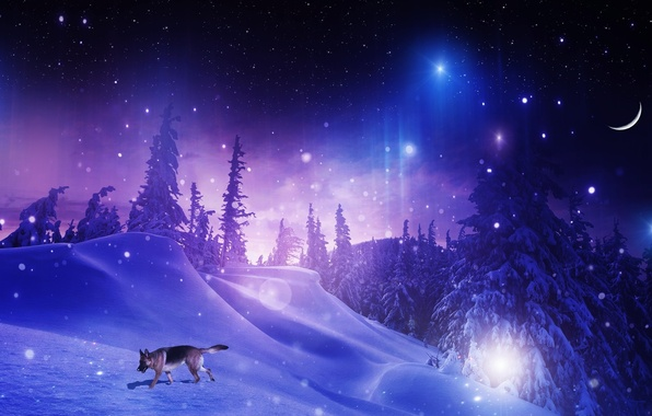 Wallpaper Phone Falling Snowflakes Wallpaper Winter Forest Stars Snow Trees Snowflakes