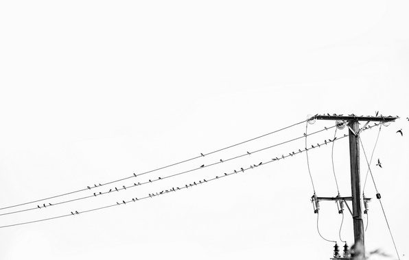 Wallpaper black and white, high voltage, Birds on a Wire