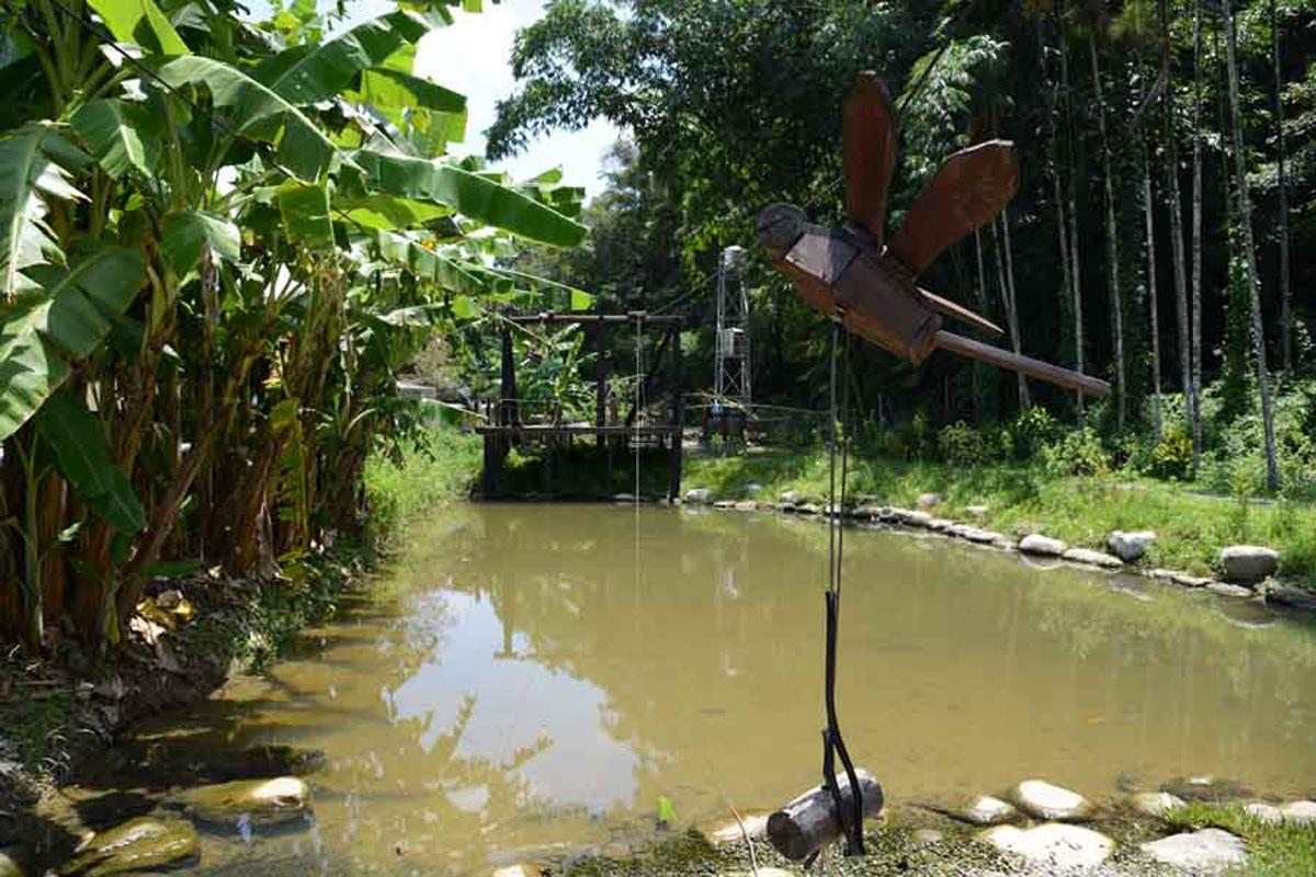 自然生態 - 桃米生態村旅遊服務官方網站