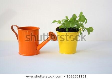 Petunia seedlings stock photo  Julio Viard lalito 1285730  Stockfresh