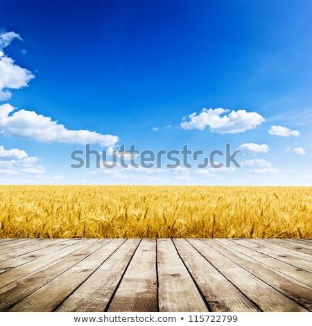 blue sky and wood floor background stock photo  Vitaliy Pakhnyushchyy Pakhnyushchyy 2050174