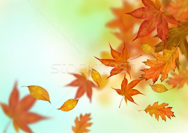 Wallpaper Border Falling Off Autumn Stock Photos Stock Images And Vectors Stockfresh