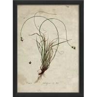 Botanical Framed Graphic Art | Wayfair