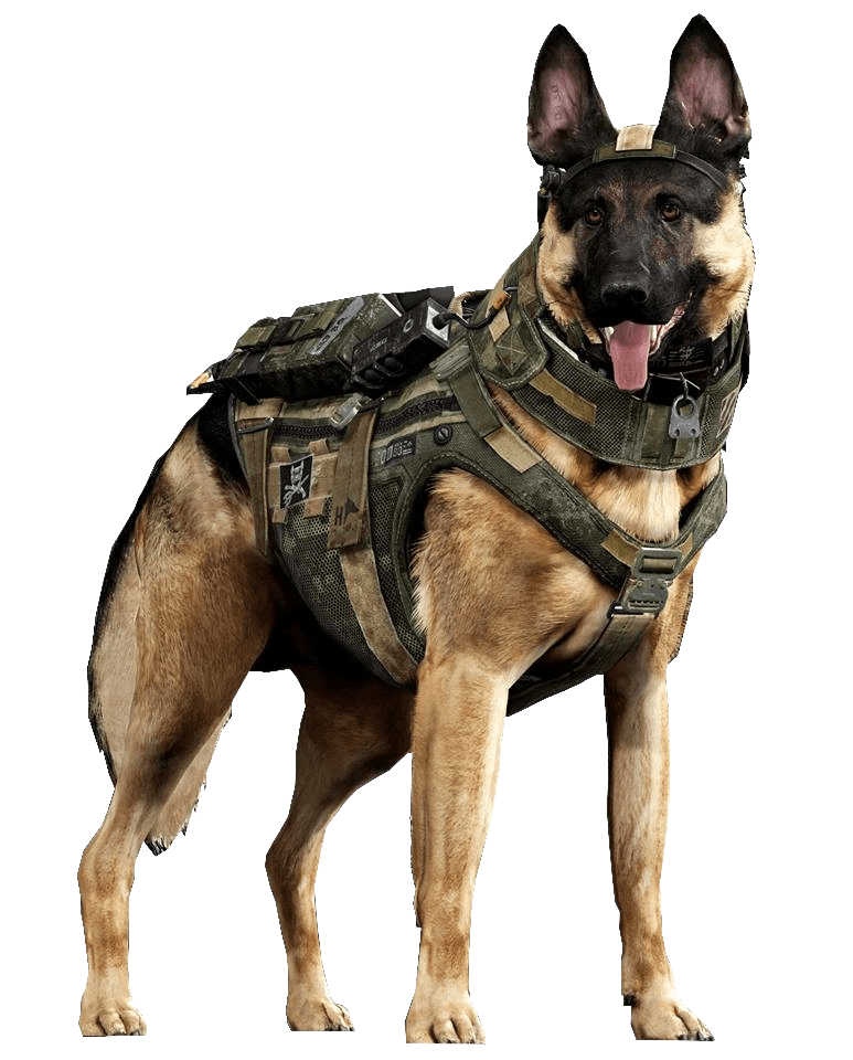 Riley the Call of Duty Ghosts Dog