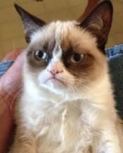 A grumpy looking cat