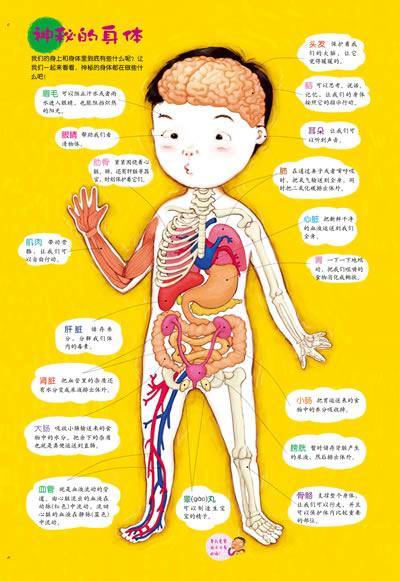 人的身體部位名稱_腳各部位的名稱圖解_汽車各部位名稱圖解-圈子花園圖片