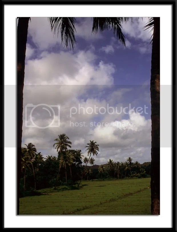 Fields across from the Ramnathi Temple Devasthan in Goa pic by Arun Shanbhag