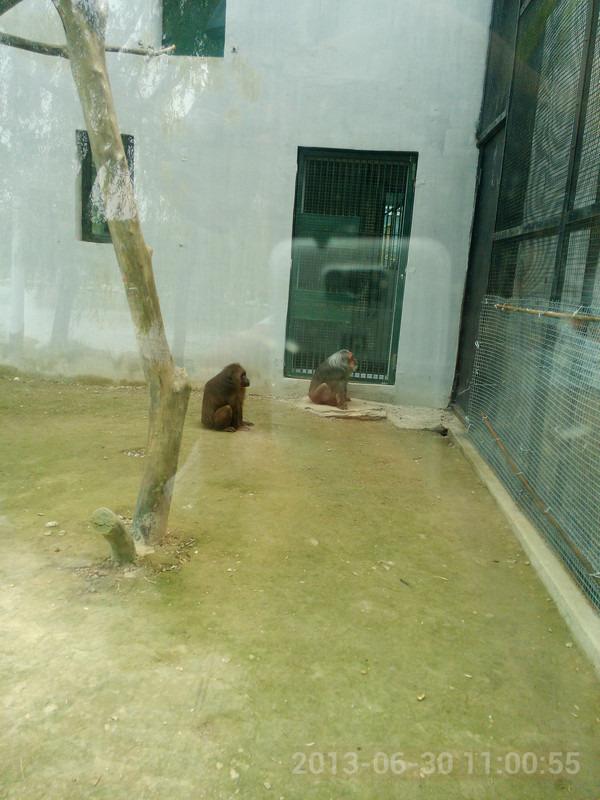 天津狼友游記----天津動物園_朗逸純電論壇_易車論壇