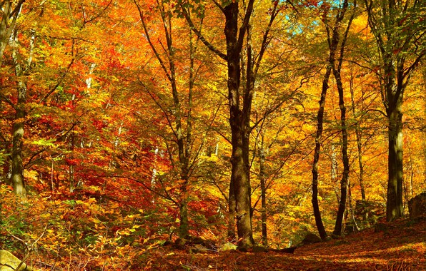 Falling Leaves Wallpaper For Iphone Wallpaper Autumn Trees Forest Fall Foliage Autumn