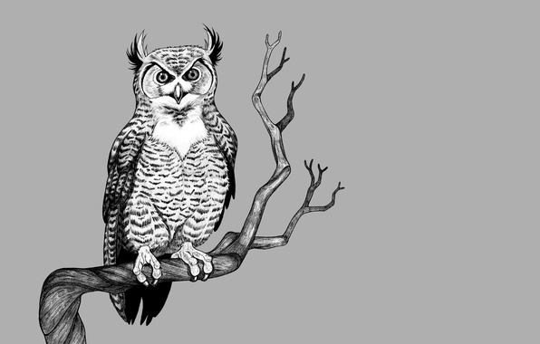 Wallpaper tree, owl, bird, branch, light background, owl