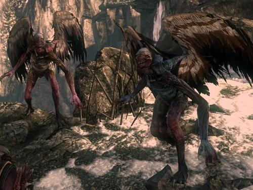Harpy Witcher Wiki Wikia