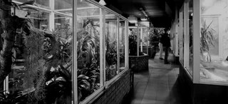 Dis durrell reptile house