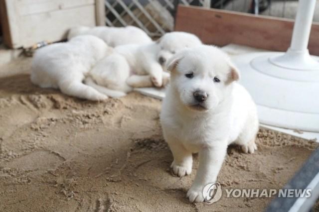 문 대통령, 북한에서 온 풍산개 '곰이' 새끼 공개