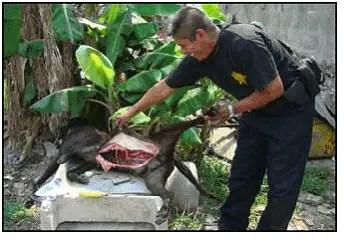 Vendian carne de perros a puestos de comida callejeros