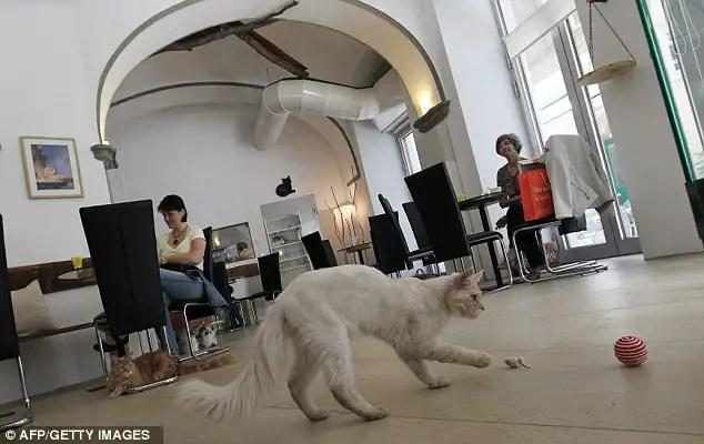 article214612112f6289c0 - En Viena abren el primer café para gatos de Europa