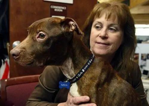 Increíble recuperación de un perro a punto de morir