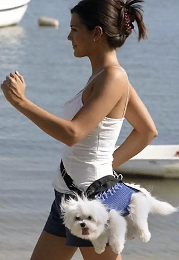 enhancedbuzz31043136380 - #Fotos 33 perros totalmente descontrolados