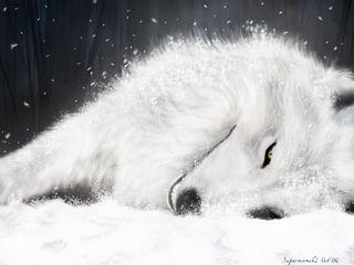Lobo blanco 2