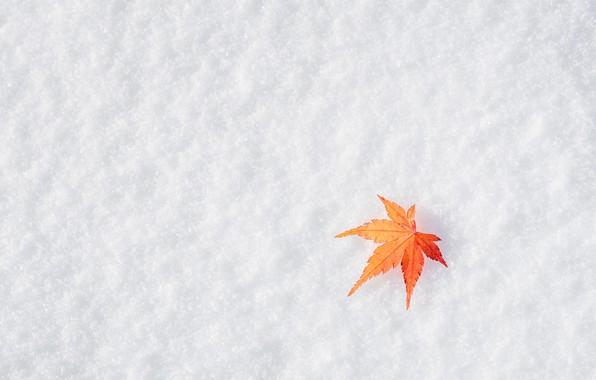 Wallpaper winter, autumn, leaves, snow, maple, winter
