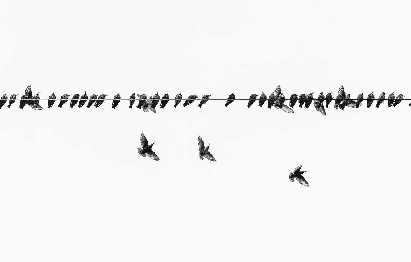 Wallpaper birds, nature, wire images for desktop, section