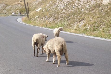 Parco storie di pascolo vagante pagina 3 - La pagina della colorazione delle pecore smarrite ...