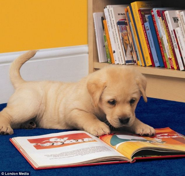 Perro leyendo un libro