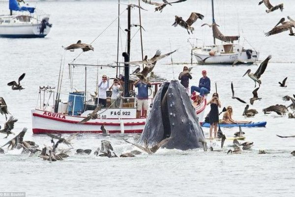 noticias Fotografían una impresionante ballena en California, Estados Unidos