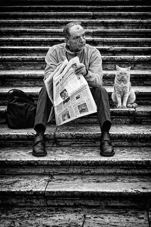 noticias perros y gatos