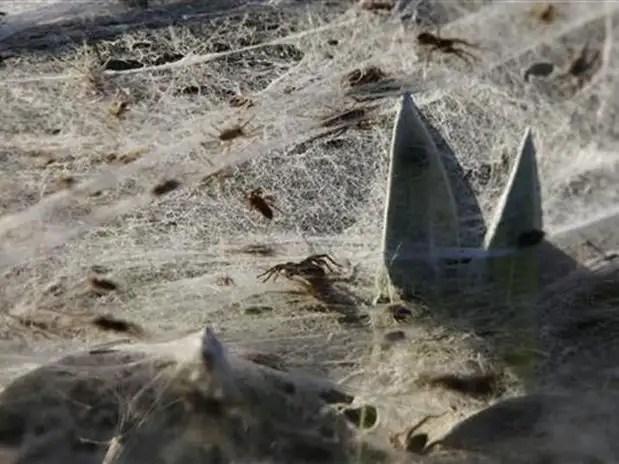 getq - Miles de arañas invaden pueblo en Australia obligando a sus habitantes a evacuar