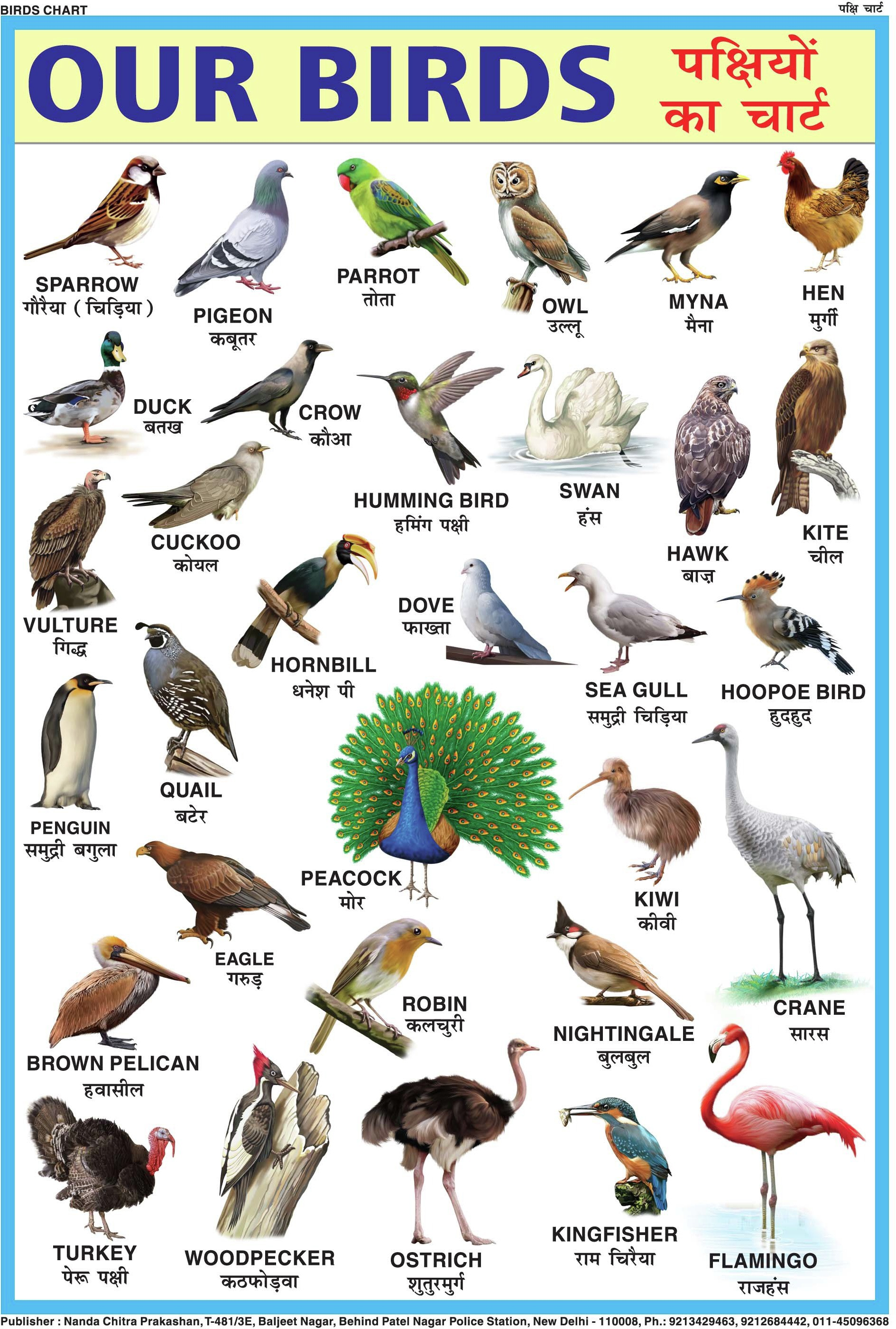 NcpBIRDS CHART FOR CHILDREN Paper Print Price in India