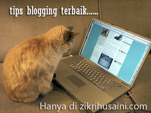 cat blogging, kucing main computer, cat blogging, picture cat, kucing cute