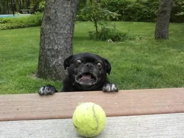 enhancedbuzz17344136380 - #Fotos 33 perros totalmente descontrolados