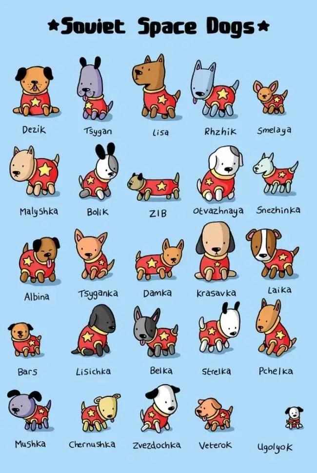 sovietspacedogs - Homenaje a todos los perros soviéticos que viajaron al espacio