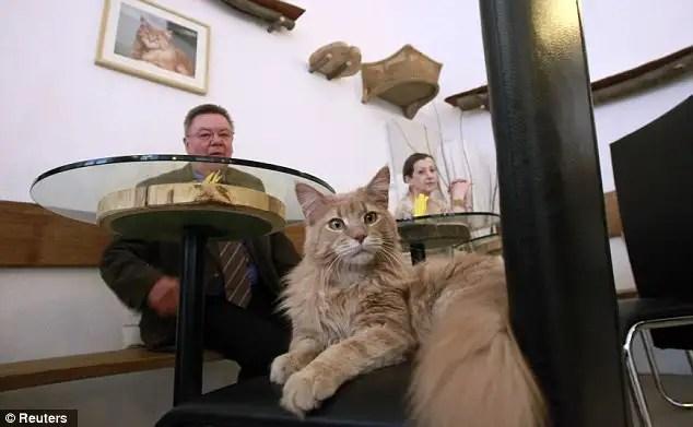article214612112f876aa0 - En Viena abren el primer café para gatos de Europa