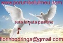 http://www.porumbelulmeu.com/