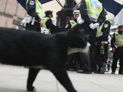 gato400060410 - Gato Policia en Shapingba, China