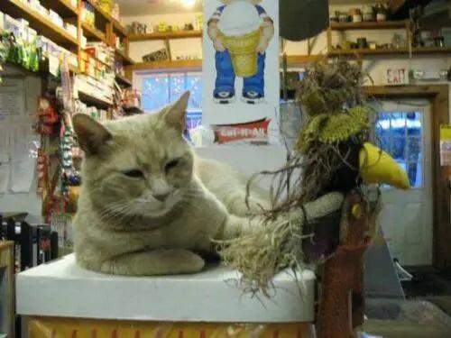 alcaldegato20 - El alcalde de un pueblo de Alaska es un gato (un gato de verdad)
