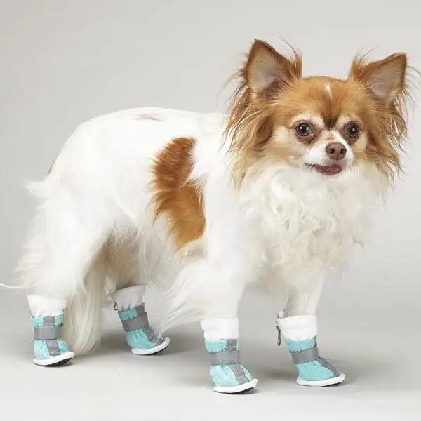 Zapatos protectores para perros