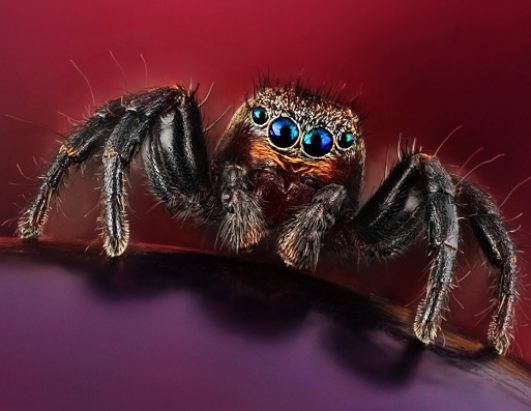noticias imágenes de insectos revelan sorprendentes colores