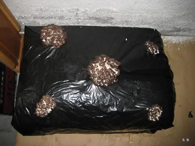 cultivos045 - Manual para cultivar setas en casa