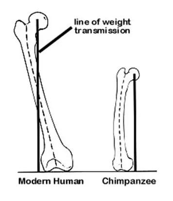 CURRICULUM SUPERFRIENDS: Monkey or Man